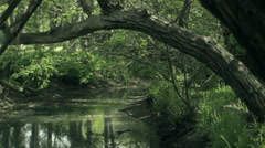 Tree arches over lovely creek Stock Footage