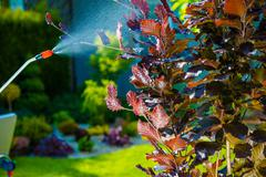 Backyard Garden Pest Control Spraying. - stock photo