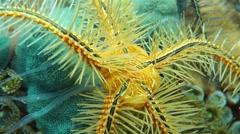 Underwater creature closeup sponge brittle star Stock Footage