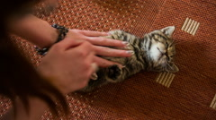 Caressing baby cat white belly - stock footage