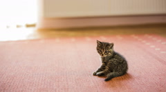 Baby cat trying to scratch and fall back Stock Footage