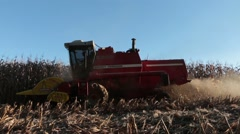 Harvesting cornfield in sunny day Stock Footage