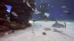 Reef sharks Stock Footage