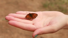butterfly sitting on the hand - stock footage