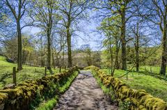 English Country lane in dappled sunlight - stock photo