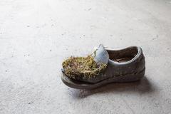 Abandoned moss-grown shoe Stock Photos