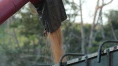 Load corn Stock Footage