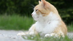 Red cat in city park Stock Footage