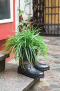 Grass in rubber boots creative used as flower pot - stock photo