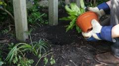 Man planting ferns in garden Stock Footage