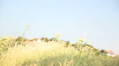 Fitness girl doing stretching and yoga exercises in natural environment Stock Footage