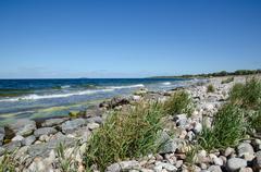 Stony bay with green reeds - stock photo