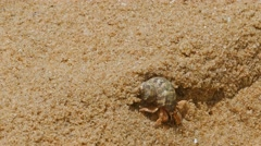 Hermit crab in the sand close-up 4k Stock Footage