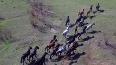 Aerial View.  Нerd of wild horses galloping Stock Footage