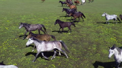 Airview herd of wild horses galloping Stock Footage