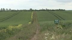 Stripe of oilseed rape through cereal crop. - stock footage