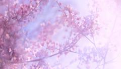 Blooming pink Japanese Sakura with soft blur effect and lens flare Stock Footage