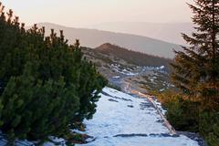 Mountain snowy landscape with pine trees in Zakopane Stock Photos
