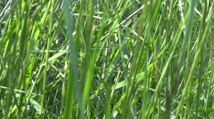 Summer Grass At Wind and Sun - 01- Close Up Stock Footage