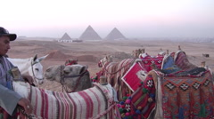 Egyptian Man Preps Camels Near the Pyramids of Giza - stock footage