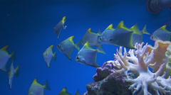 underwater video of tropical fish - stock footage