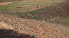 Deer on shoreline, walking Stock Footage