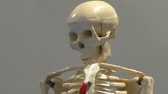 Human body skeleton model Stock Footage
