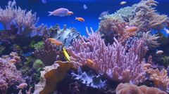 Underwater coral reef and tropical fishes - stock footage