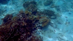 Diving at Phi Phi Islands, Thailand Stock Footage