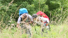 Backpackers on hiking journey looking at vegetation Stock Footage
