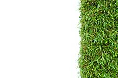 grass on a white background - stock photo