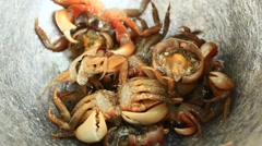 Processing food from shrim and crab by mortar and pestle Stock Footage