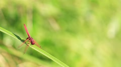 A red dragon Stock Footage