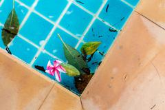 Plumeria flowers floating in water at spa place - stock photo