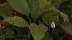 Bahai Gardens. Acre. Stock Footage