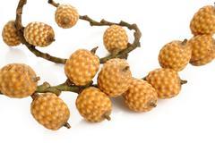 Ripe rattan fruit on white Stock Photos