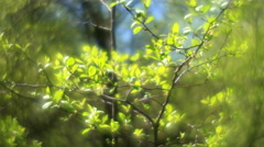 Fantasy branch with shining green leaves, trembling on misty background Stock Footage