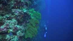Drop off on a coral reef Stock Footage