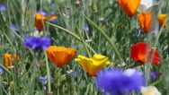 Stock Video Footage of wild flowers in long grass