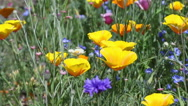 Stock Video Footage of wild yellow flowers blowing the wind