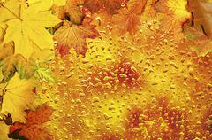 Autumn leaves frame with water drops Stock Photos