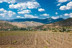 Young vineyard in the valley Stock Photos