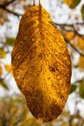 fading autumn leaf - stock photo