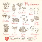 Set drawings of mushrooms for design menus, recipes and packages product Stock Illustration
