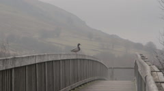 Duck Sitting on Bridge Stock Footage