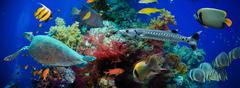 Tropical Anthias fish with net fire corals and shark - stock photo