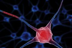 Realistic rendering of neurone - in red colors - stock illustration