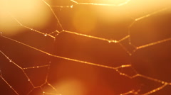 Spider net in the evening sunshine and warm atmosphere Stock Footage
