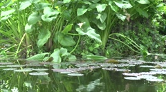 Pond with Lilly Pads, Nature Sounds Stock Footage