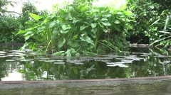 Pond with Lilly Pads, Nature Sounds, Wide Shot Stock Footage